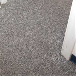 Cleaned Carpet after Challenger Systems